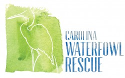 Carolina Waterfowl Rescue